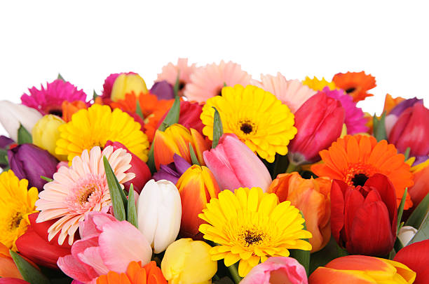 Tulips And Daisies:スマホ壁紙(壁紙.com)
