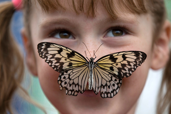 Butterfly - Insect「Butterflies Are Released Into The Natural History Museum's Exhibtion」:写真・画像(14)[壁紙.com]