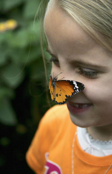 6-7 Years「Tropical Butterflies At London Zoo」:写真・画像(14)[壁紙.com]