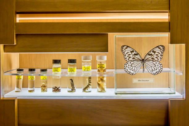 Butterfly specimens in research lab:スマホ壁紙(壁紙.com)
