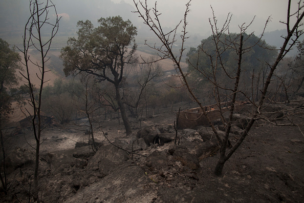 Portugal「Dozens Dead As Wildfires Spread Across Northern Spain And Portugal」:写真・画像(13)[壁紙.com]