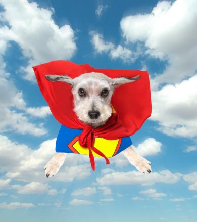 Superhero「Super Dog」:スマホ壁紙(13)