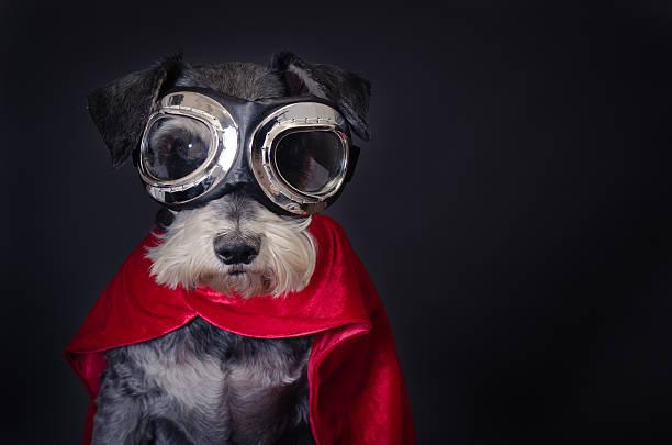 Super Dog:スマホ壁紙(壁紙.com)