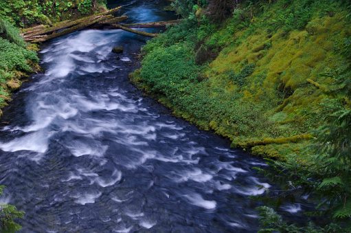 ウィラメット国有林「McKenzie River, Willamette National Forest, Oregon」:スマホ壁紙(17)