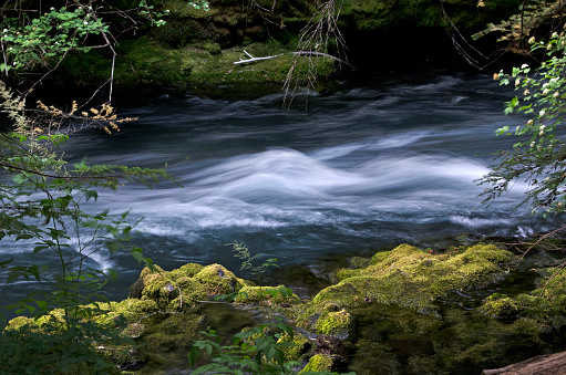 ウィラメット国有林「McKenzie River, Willamette National Forest, Oregon」:スマホ壁紙(11)