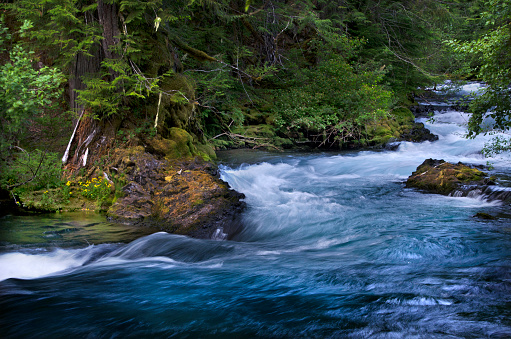 ウィラメット国有林「McKenzie River, Willamette National Forest, Oregon」:スマホ壁紙(12)