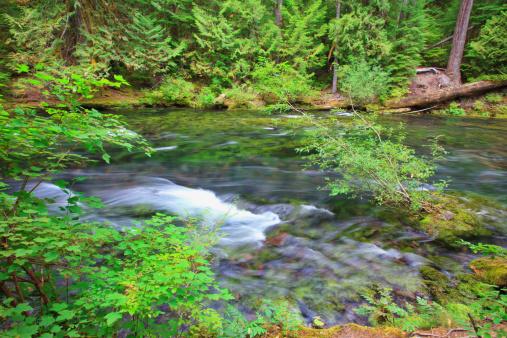 Willamette National Forest「Mckenzie River In Willamette National Forest」:スマホ壁紙(18)