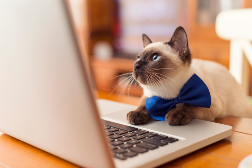Animal Whisker「cat using laptop」:スマホ壁紙(10)