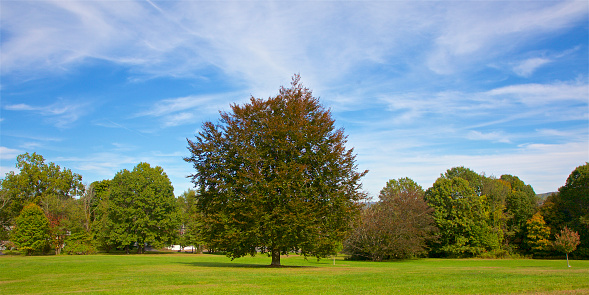 Lush Foliage「Trees top lawn at East Rock Park, New Haven, Connecticut」:スマホ壁紙(1)
