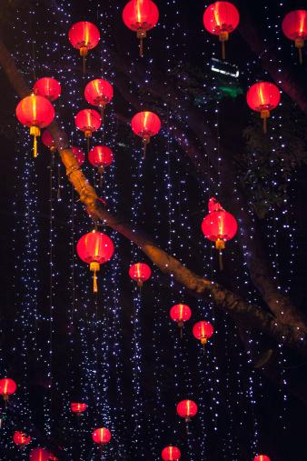 Chinese Lantern「Chinese lanterns hanging from tree」:スマホ壁紙(14)