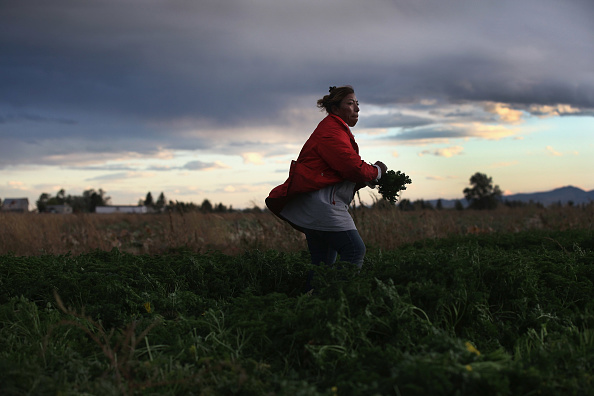 Parsley「Colorado Farm Suffers As Immigrant Workforce Diminishes」:写真・画像(5)[壁紙.com]