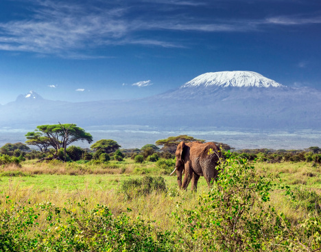 Animal Wildlife「Elephant in front of Mount Kilimanjaro & Mawenzi Peak」:スマホ壁紙(1)