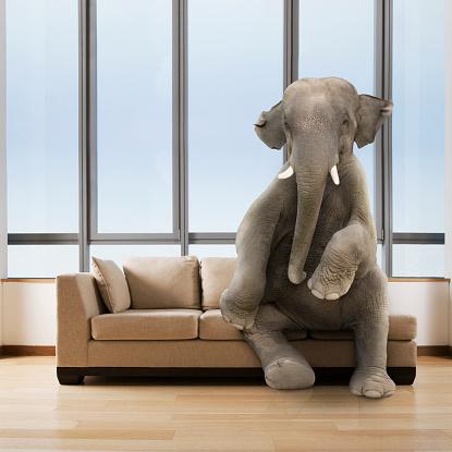 Elephant「Elephant in the Room」:スマホ壁紙(15)