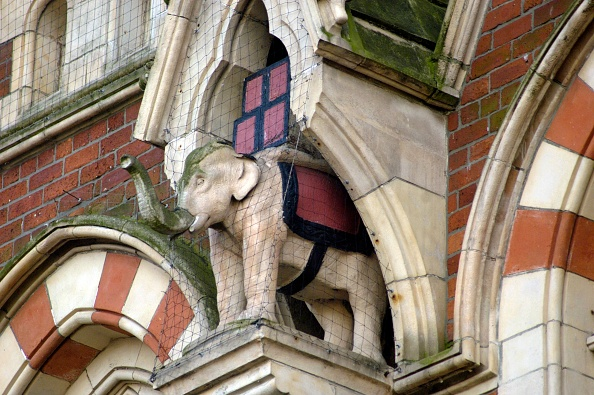Tea Room「Elephant In Niche」:写真・画像(16)[壁紙.com]