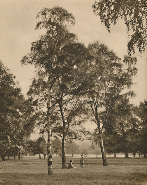 Birch Tree「The Lace-Work Of The Leaves: A Summer Morning In Hyde Park」:写真・画像(9)[壁紙.com]
