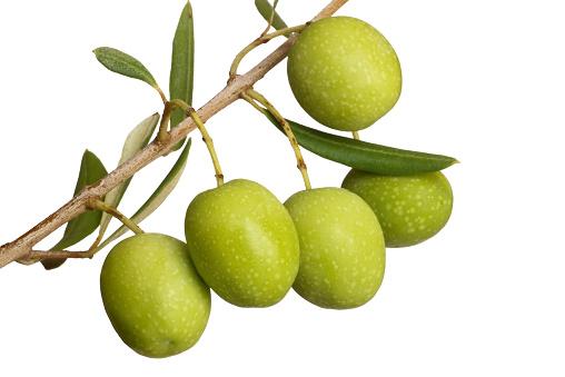 Olive Branch「Olive」:スマホ壁紙(10)