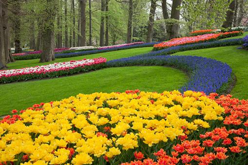 Keukenhof Gardens「Tulips in Keukenhof Park」:スマホ壁紙(8)