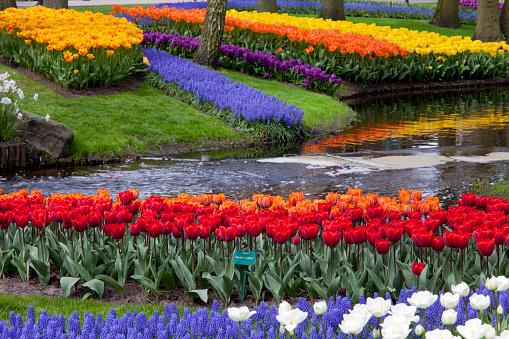 Keukenhof Gardens「Tulips in Keukenhof Park」:スマホ壁紙(6)