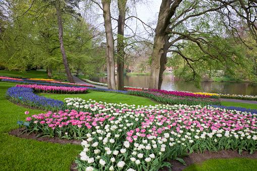 Keukenhof Gardens「Tulips in Keukenhof Park」:スマホ壁紙(4)