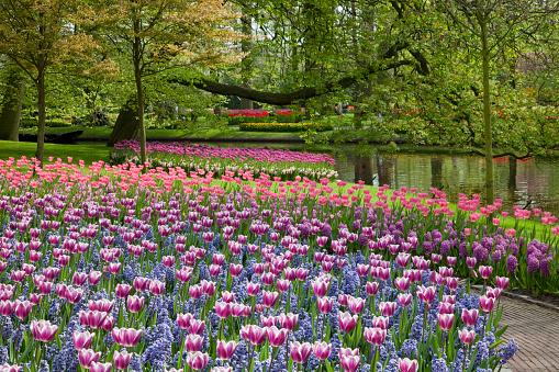 Keukenhof Gardens「Tulips in Keukenhof Park」:スマホ壁紙(0)