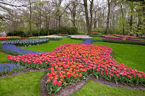 Keukenhof Gardens「Tulips in Keukenhof Park」:スマホ壁紙(1)