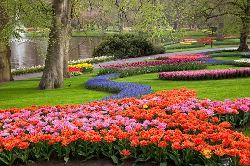 Keukenhof Gardens「Tulips in Keukenhof park」:スマホ壁紙(7)
