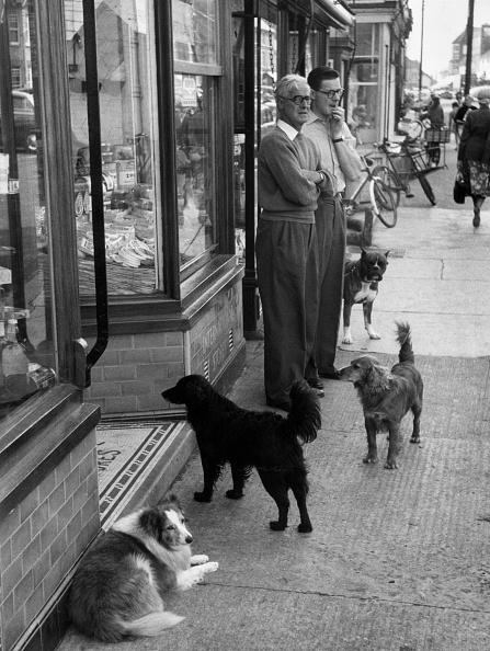 Domestic Animals「Butcher's Dogs」:写真・画像(15)[壁紙.com]