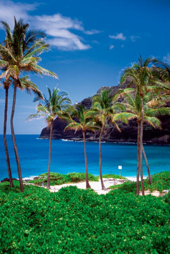 オアフ島「Palm trees on a beach, Waimanalo Beach, Oahu, Hawaii, USA」:スマホ壁紙(15)