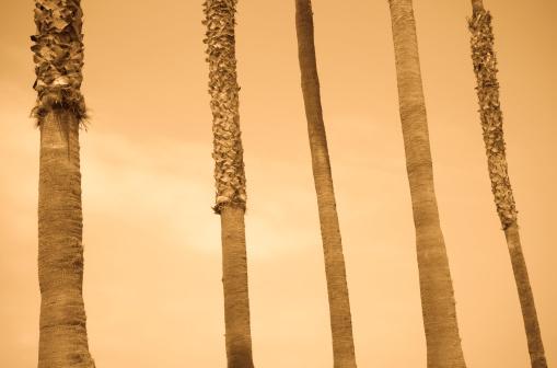 City Of Los Angeles「Palm trees」:スマホ壁紙(6)