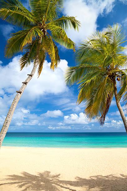 palm trees at a tropical beach in the Caribbean:スマホ壁紙(壁紙.com)