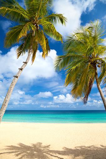 Seascape「palm trees at a tropical beach in the Caribbean」:スマホ壁紙(10)