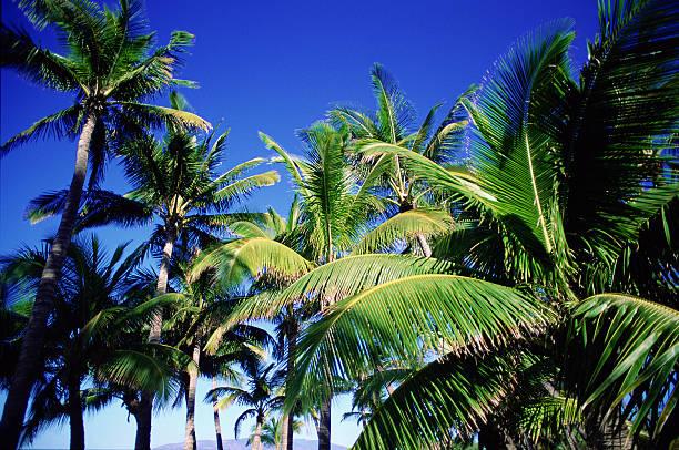 Palm trees and blue sky:スマホ壁紙(壁紙.com)