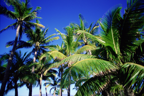 Frond「Palm trees and blue sky」:スマホ壁紙(12)