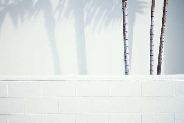 Palm trees & Shadows:スマホ壁紙(壁紙.com)