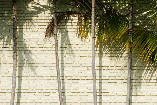 Palm tree「Palm trees against brick wall」:スマホ壁紙(6)