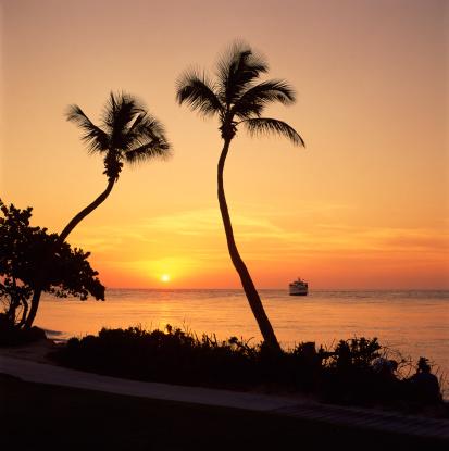 Passenger「Palm trees at sunset」:スマホ壁紙(8)