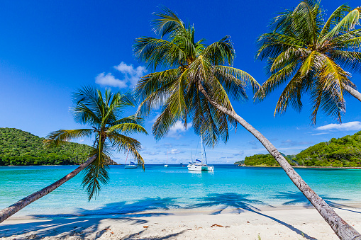 Salt Whistle Bay「Palm trees line sandy coastline of Salt Whistle Bay, Mayreau」:スマホ壁紙(0)