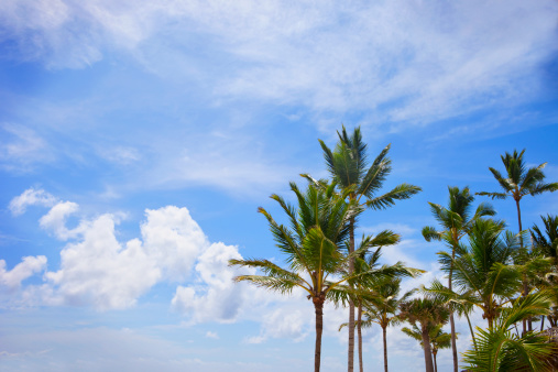 Frond「Palm Trees Against A Blue Sky With Clouds」:スマホ壁紙(19)
