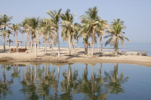 アラビア海「ヤシの木が並ぶビーチ」:スマホ壁紙(5)