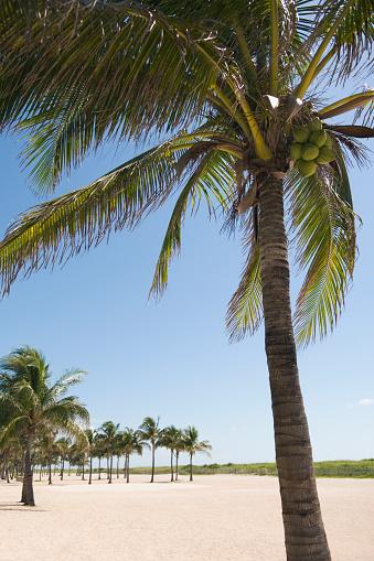 Miami Beach「Palm trees growing on beach」:スマホ壁紙(14)