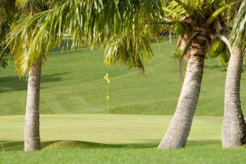 Northern Mariana Islands「Palm trees and golf flag, Saipan, USA 」:スマホ壁紙(17)