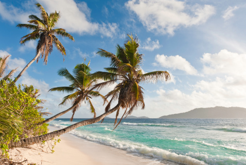 Frond「Palm trees waving over tropical island beach white ocean surf」:スマホ壁紙(19)