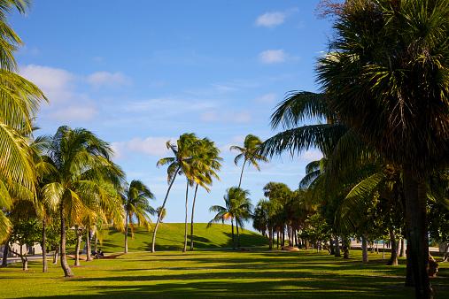 Miami Beach「Palm trees, hillside and lawn, Miami Beach」:スマホ壁紙(7)