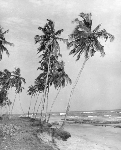 Tropical Climate「Tropical Beach」:写真・画像(14)[壁紙.com]