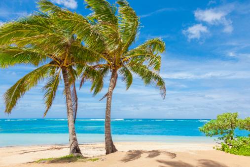 旅行「ヤシの木々、熱帯のビーチ、砂、空、太平洋岸、カウアイ島」:スマホ壁紙(9)