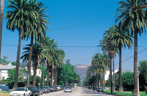 Avenue「Palm trees in Los Angeles」:スマホ壁紙(2)