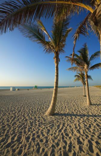 Miami Beach「Palm trees on beach」:スマホ壁紙(0)