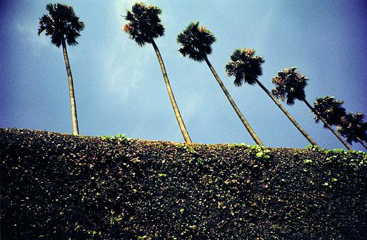 Low Angle View「Palm trees」:スマホ壁紙(5)