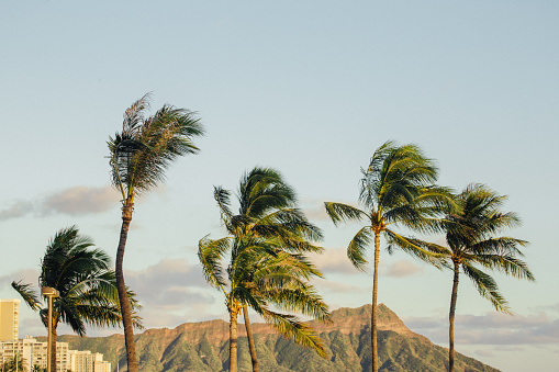Volcanic Landscape「Palm trees and Diamond Head Crater, Waikiki Beach, Hawaii, America, USA」:スマホ壁紙(2)
