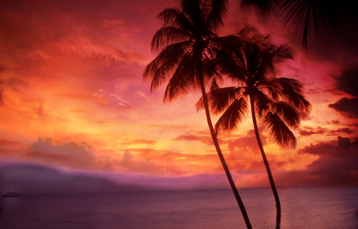 南国「Palm trees sunset」:スマホ壁紙(18)